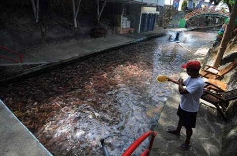 KKP Perkuat Struktur Ekonomi Pelaku Budi Daya Ikan di Indonesia Timur