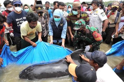 UNAIR Terjunkan TIM ke Lokasi Paus Terdampar di Bangkalan