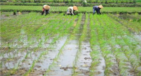 Dinas Pertanian Boyolali Dorong Petani Ikut Asuransi