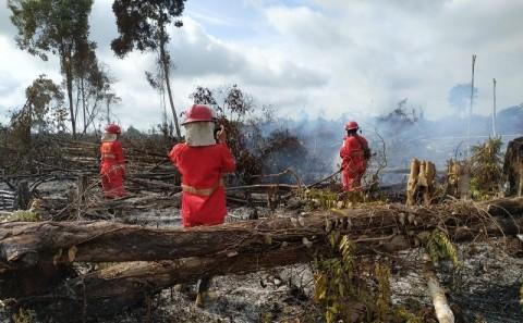 2020, Indonesia Terhindar dari Tekanan Internasional Terkait Karhutla