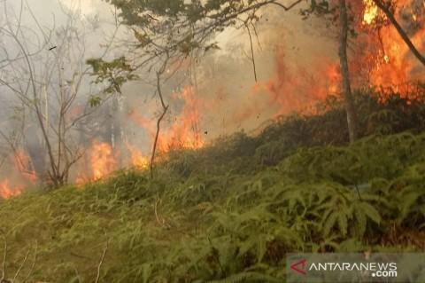 Lima Kawasan Hutan di Batam Terbakar dalam Sebulan