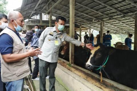 Makin Diminati, 1.020 Sapi di Pringsewu Terdaftar AUTS/K