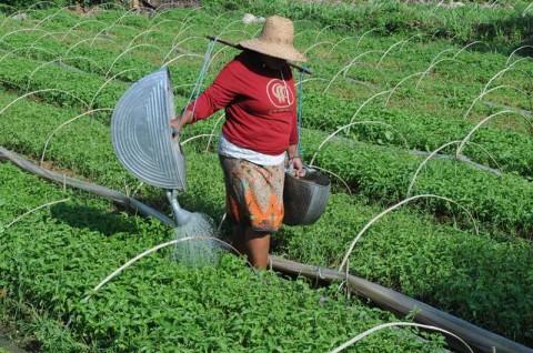 Pemerintah Aceh Tanggung 20 Persen Subsidi Premi AUTP
