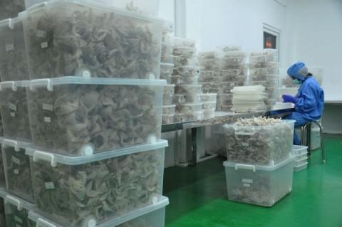 RI Ekspor Sarang Burung Walet USD1,13 Miliar ke Tiongkok