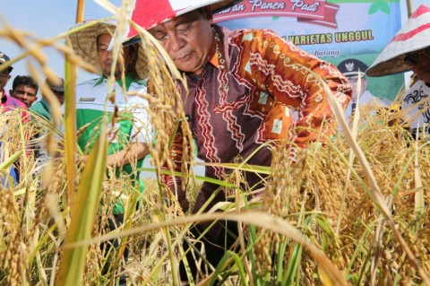 Surplus Beras, Kalsel Jadi Penyangga Pangan Nasional