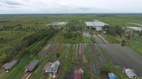 Mentan Dorong Percepatan Perbaikan Jaringan Irigasi di <i>Food Estate</i> Kapuas
