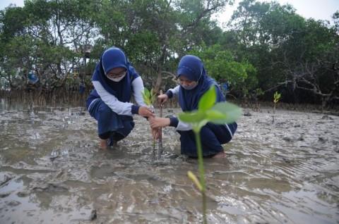 KKP Raih Tambahan Anggaran Rp43,34 miliar untuk Rehabilitasi Mangrove