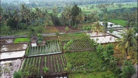 Pemerintah Didorong Maksimalkan Pengelolaan 74.500 Desa