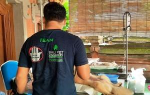 Denpasar Bebas Rabies Selama 4 Tahun