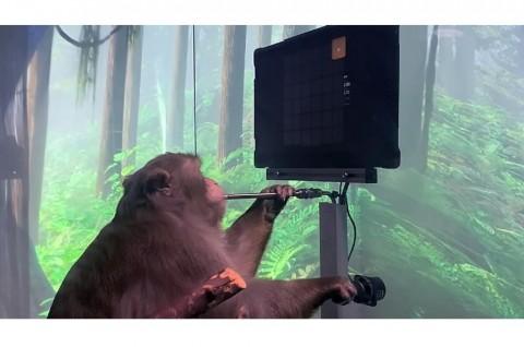Video Elon Musk Klaim Monyet Main Pong dengan Pikiran