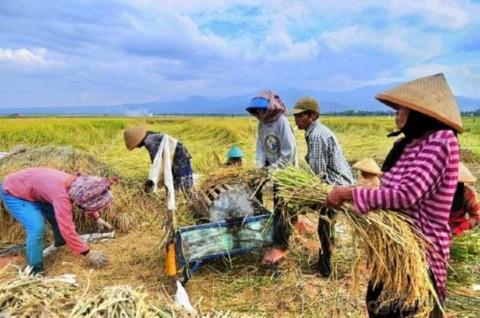 Pemkab Lebak Dorong Petani Milenial Tingkatkan Produksi