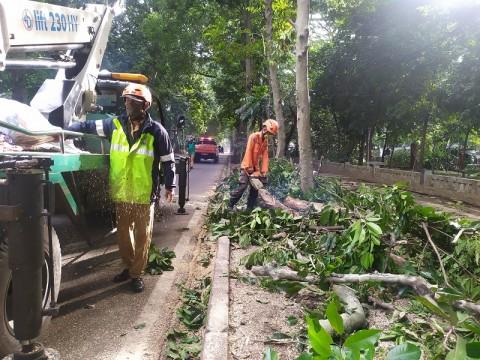 Antisipasi Pohon Tumbang, 991 Pohon di Jakpus Dipangkas