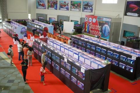 KKP Optimistis Indonesia Bisa Jadi Raja Eksportir Ikan Hias Dunia