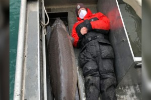 Ikan 'Monster' Berusia 100 Tahun Ditangkap di Sungai Detroit