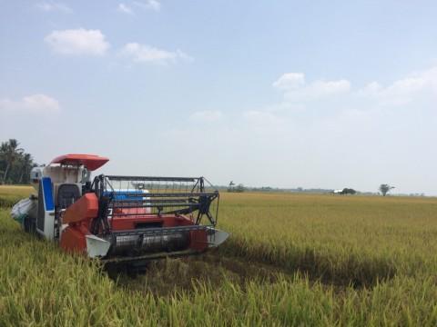 PHK Tingkatkan Tenaga Kerja di Sektor Pertanian