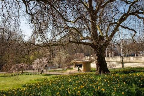 Berita Populer Properti, Desain Kedai Kopi Istana Buckingham hingga Rumah Marshmello