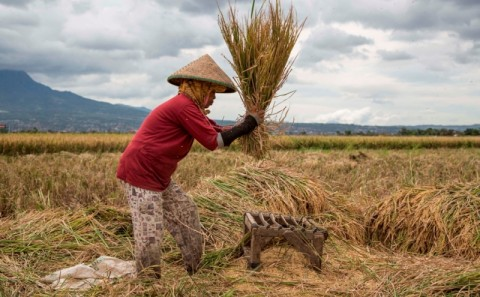 BPS: Nilai Tukar Petani Terus Naik di Gorontalo