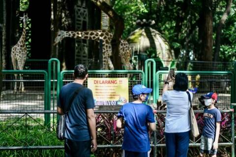 Kebun Binatang Ragunan Siapkan Pembatasan Pengunjung