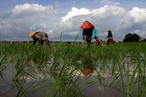 Ratusan Petani Agam Terima KUR dari BNI Rp30 Miliar