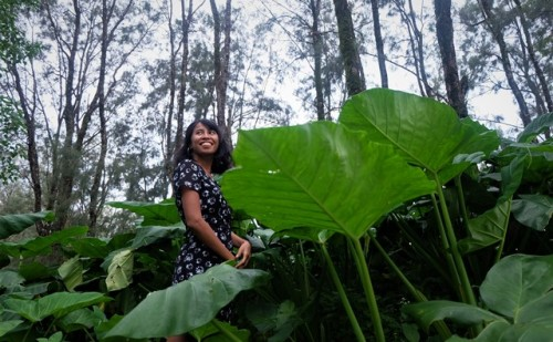 Rimbunnya tumbuhan keladi yang terhampar luas dengan daun beraneka ukuran yang indah. (Foto: Dok. Arthurio Oktavianus)