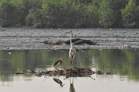 Hari Migrasi Burung Sedunia, IPB Amati Burung Singgah di Indonesia