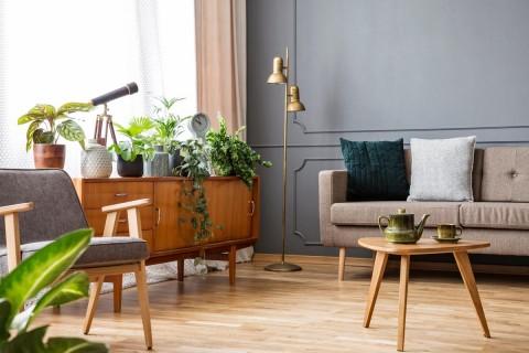 5 Tanaman Ini Bikin Dekorasi Rumah Lebih Segar