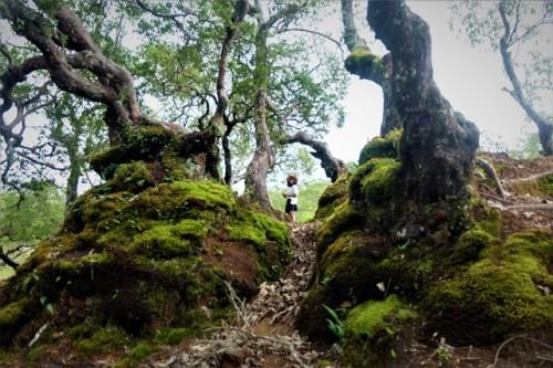 Hutan Bonsai Fatumnasi menyuguhkan pesona magis dan berada di Desa Fatumnasi, Mollo Utara. (Foto: Dok. Arthurio Oktavianus)
