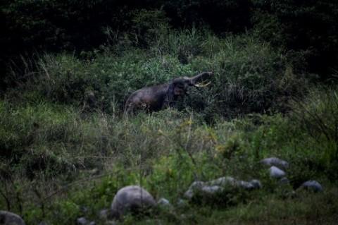 Kawanan Gajah Liar Dekati Kota di Tiongkok Usai Tempuh Jarak 500 Km