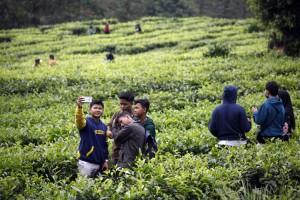 Ciptakan Kerumunan, Ratusan Lapak PKL di Puncak Bogor Dibongkar