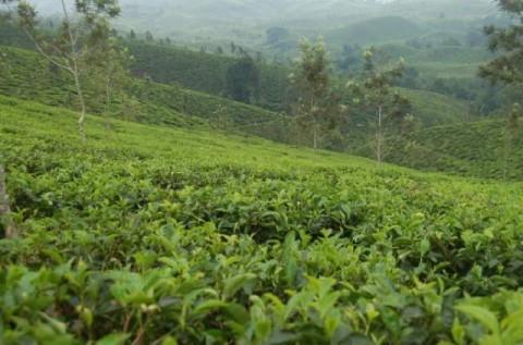 Pemkab Kubu Raya Dorong Perusahaan Perkebunan Sasar Pasar Ekspor