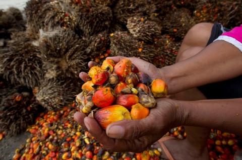 Menjawab Tantangan 'Berkelanjutan' pada Industri Kelapa Sawit Indonesia