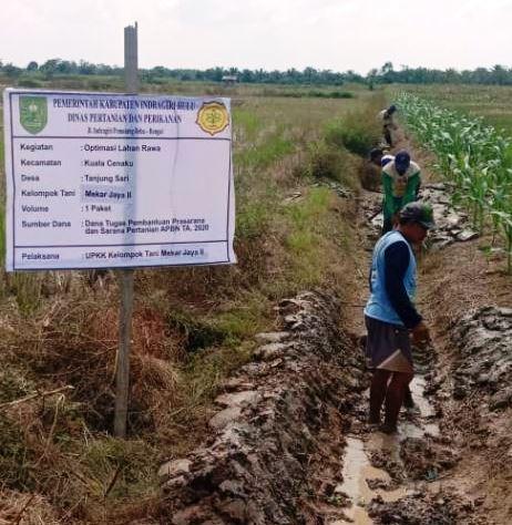 Optimasi Lahan Rawa Tingkatkan Indeks Pertanaman Petani Riau