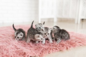 3 Berita Terpopuler Gaya: Tanaman yang Bisa Meracuni Kucing Hingga Konflik Mertua dan Menantu