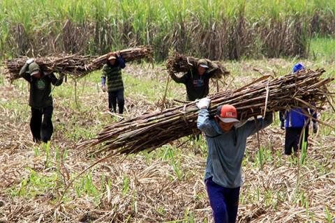 Asosiasi Petani Tebu: Permenperin 3/2021 Tingkatkan Kontrol dan Pengawasan Gula