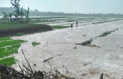Padi Terendam Banjir, Kementan Ingatkan Petani Karangasem Gunakan Asuransi