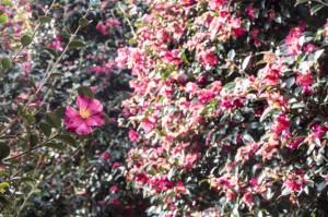 Mengenal Lively-Scent Technology, Teknologi Ekstrak Bunga yang Ramah Lingkungan