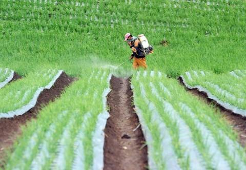 AUTP Jadi Jaring Pengaman Petani Tulungagung Agar Tak Merugi Saat Gagal Panen