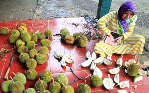 Pontianak Banjir Durian