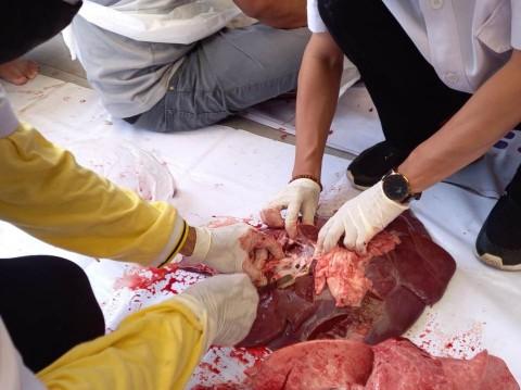 Mengandung Cacing, 22 Kg Daging Kurban di Jakpus Dimusnahkan