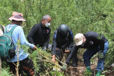 BNN Antisipasi Peningkatan Pengguna Narkotika Imbas Pandemi
