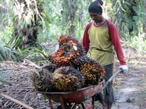 KLHK Evaluasi Wacana Perpanjangan Moratorium Perizinan Kebun Sawit