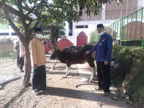 Surya Paloh dan Syahrul Yasin Limpo Sumbang Sapi ke Ponpes Amanatul Ummah