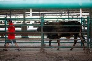 Hewan Kurban yang Disembelih di Kota Tangerang Meningkat 9,4%
