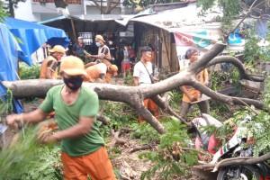 Cegah Tumbang, 1.818 Pohon di Jakpus Dipangkas