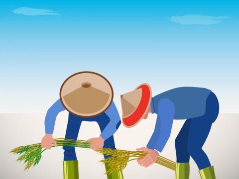 Peneliti: Sektor Pertanian Dapat Berkembang Melalui Kenaikan Investasi