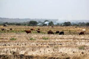 BMKG: 72% Wilayah Indonesia Masuk Musim Kemarau