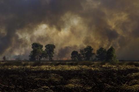 Ratusan Hektare Lahan dan Hutan di Kalsel Kebakaran