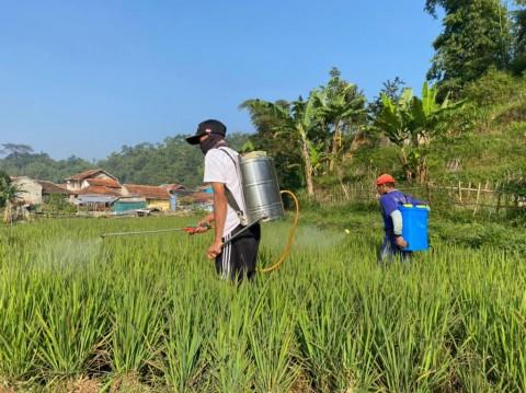 Ratusan Hektare Sawah di Manggarai Barat Kekeringan, Kementan Ingatkan Ikut AUTP