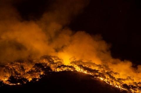Tak Ada WNI Jadi Korban dan Terkena Dampak Kebakaran Hutan Turki