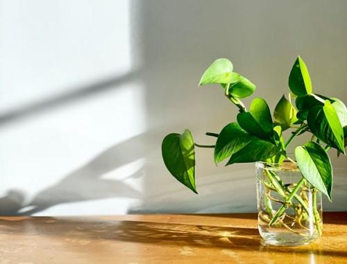 Ini lima tanaman pembersih udara yang juga membawa fengsui yang baik. (Foto: Ilustrasi/Pexels.com)
